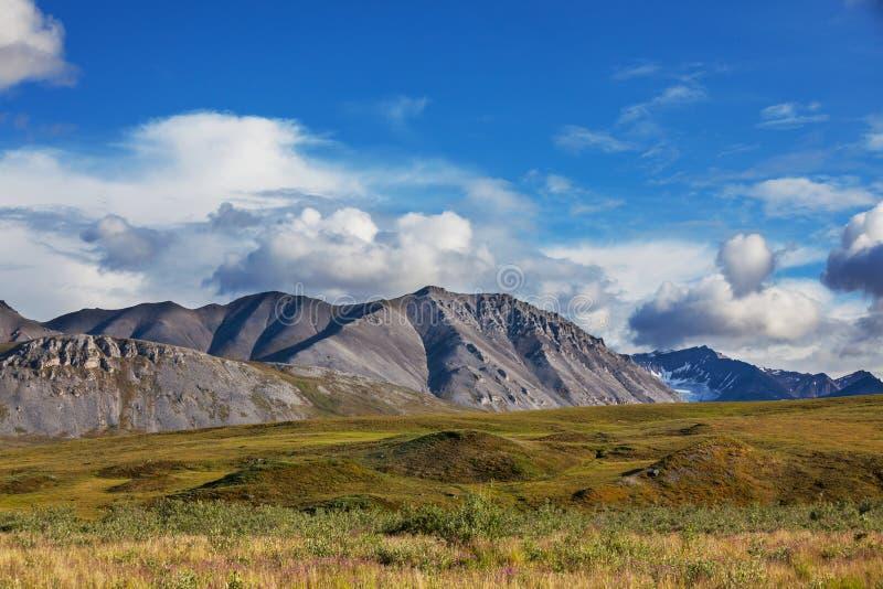 Tundra na Alaska zdjęcie stock