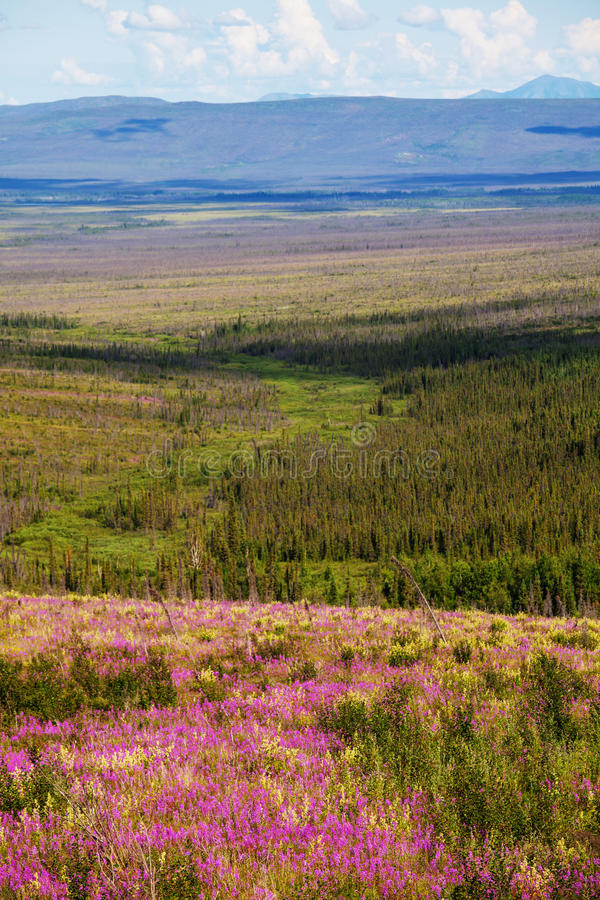 Tundra na Alaska zdjęcie royalty free