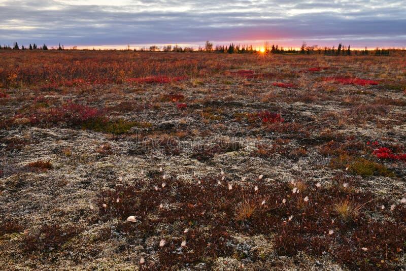 Tundra nearby a Vorkuta, Yamal peninsula. Autumn evening at tundra nearby of Vorkuta royalty free stock photography