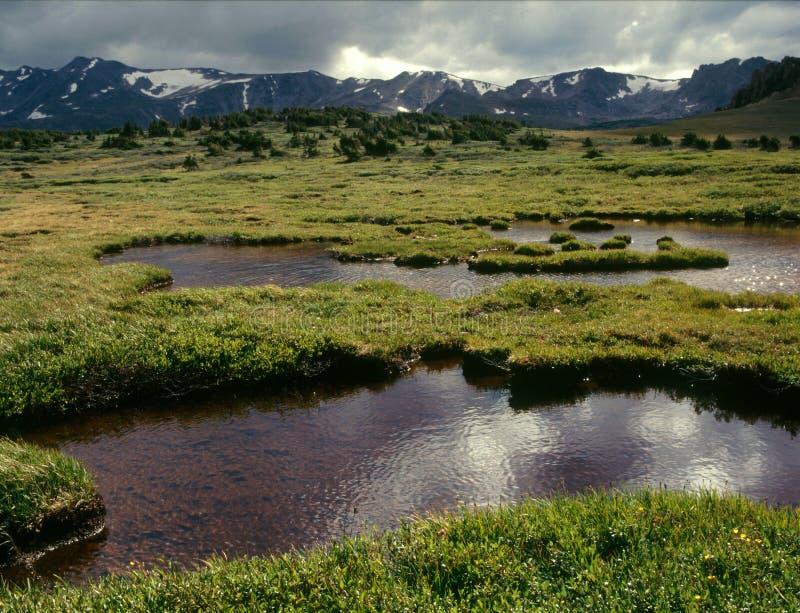 Tundra nella regione selvaggia massiccia del supporto, San Isabel National Forest, CO della traccia di Highline fotografia stock libera da diritti