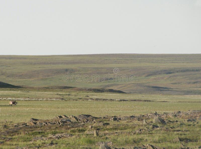Tundra nella stagione estiva fotografia stock