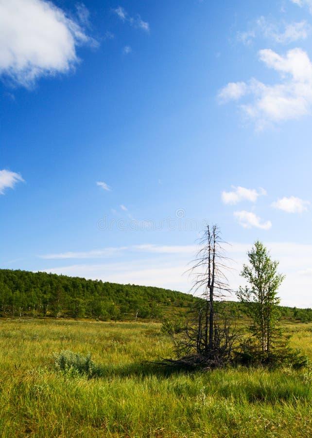 tundra północnej mountain zdjęcie stock