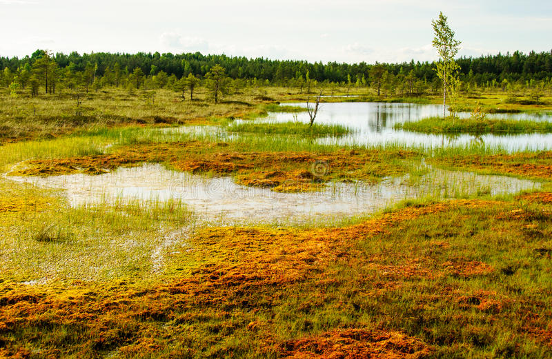 Tundra sooma Estland stockfoto