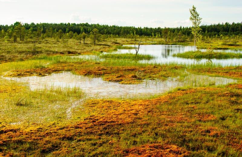 Tundra sooma estonia. Tundra landscape soomaa nationalpark estonia stock photo