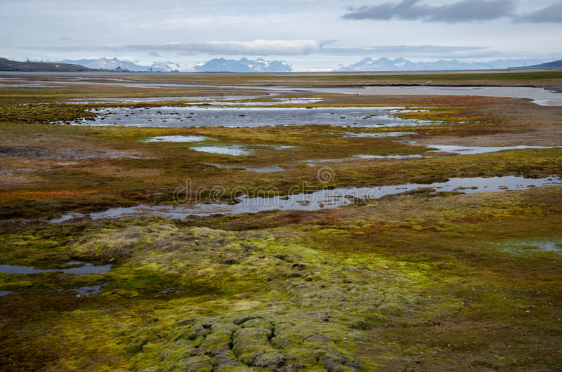Tundra on Spitsbergen, Svalbard, Norway. Vicinity of Longyearbyen which is the largest settlement and the administrative centre of Svalbard, Norway. Photo stock photo
