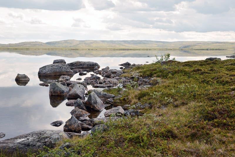 In the tundra royalty free stock photos