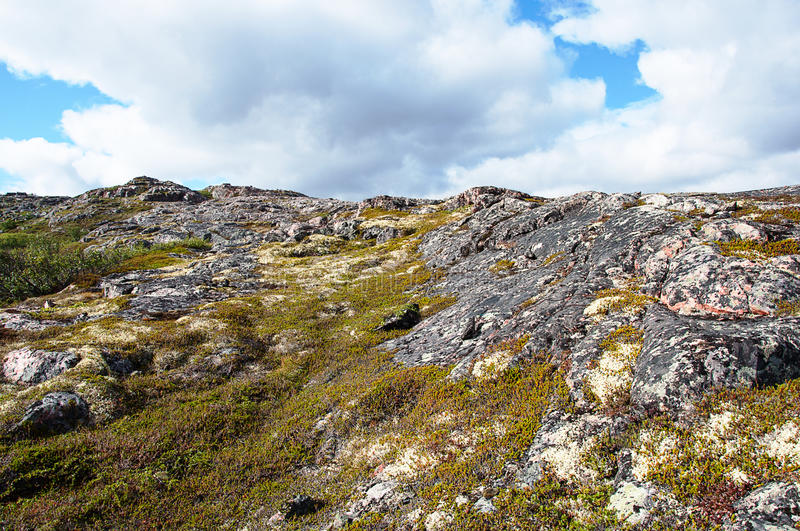 Tundra vegetation landscape in summer. Rocky tundra of the Rybachy peninsula near Murmansk, Russia. Sunny summer day royalty free stock photos