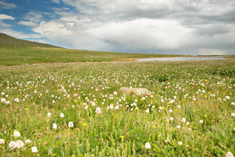 Tundra Vista imagen de archivo
