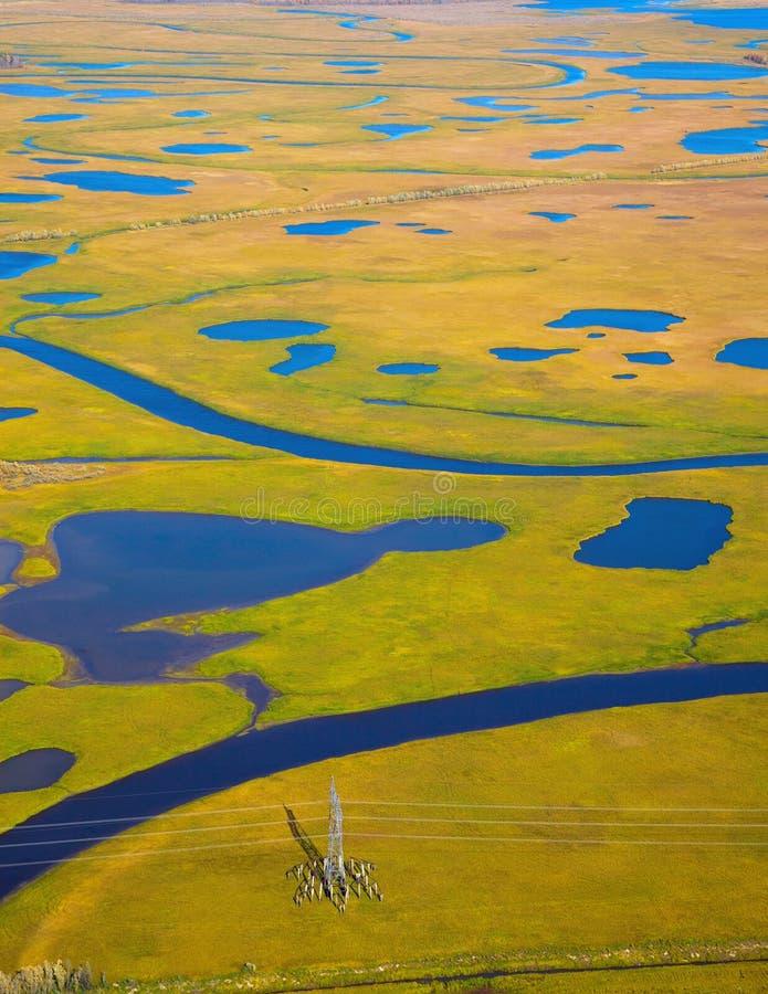 Tundra w jesieni zdjęcie royalty free