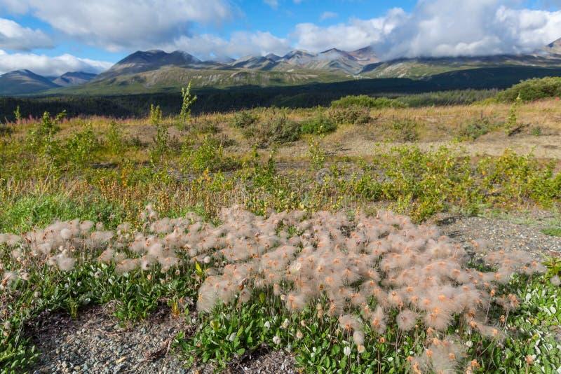 Tundra w Kanada obrazy royalty free