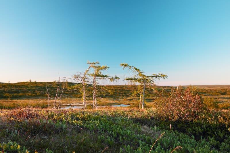 Tundralandskap royaltyfria bilder