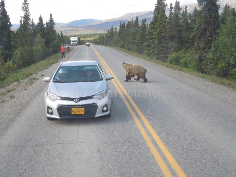 Tundrowy pustkowie wycieczki turysycznej â€' Denali, Alaska obrazy stock