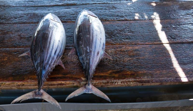 Tune o peixe na mesa de mercado fotografia de stock