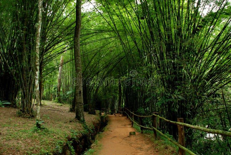 Tunel bambusowy obrazy royalty free