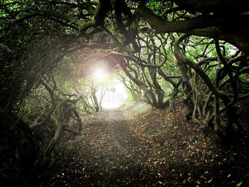 tunel drzewny zdjęcia royalty free