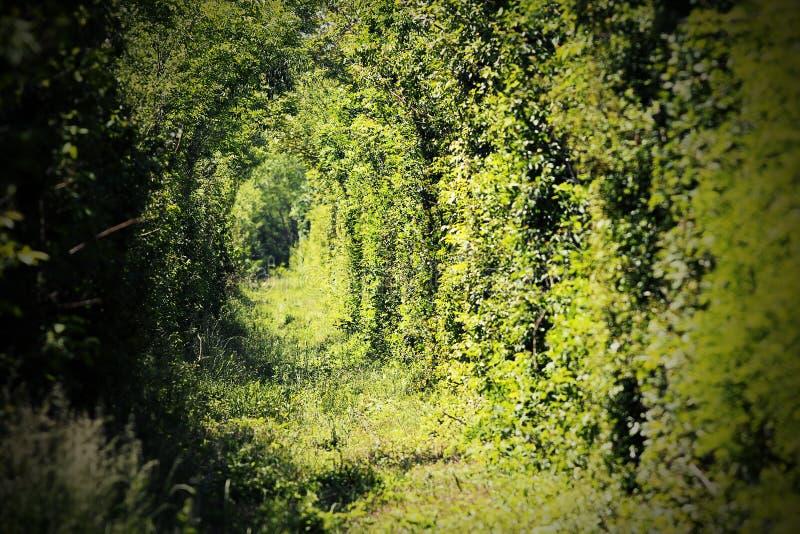 Tunel miłość blisko caransebes fotografia royalty free