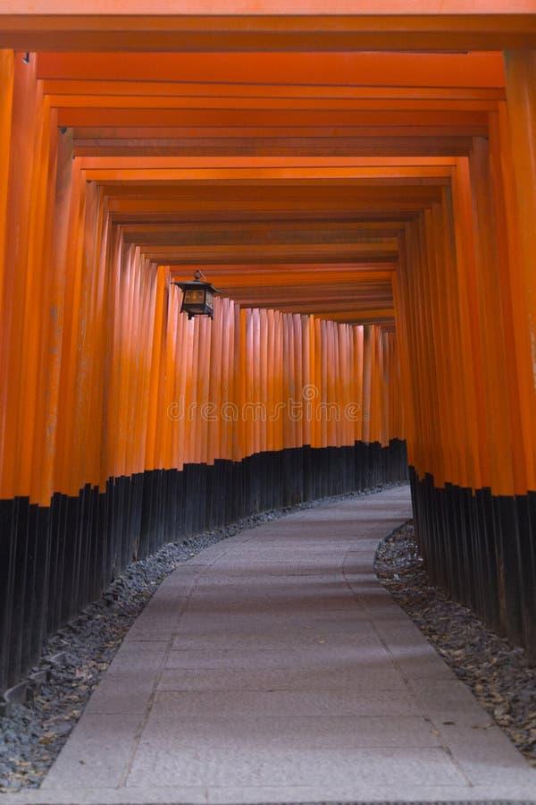 Tunel och Toriis bana i Fushimi Inari-Taisha i Kyoto under Hanami arkivfoton