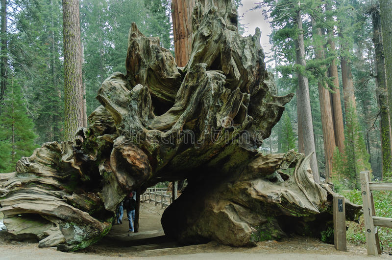 Tunelowy drzewny bagażnik fotografia royalty free