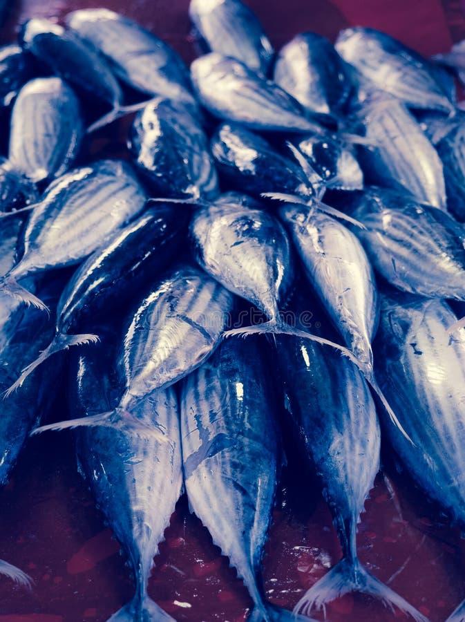 Tunes fishes apresentados no mercado imagens de stock royalty free