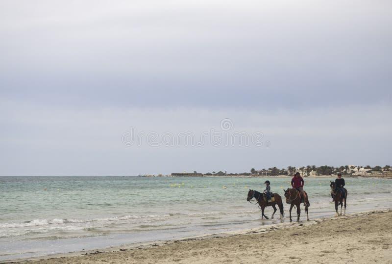 Tunezja, Djerba - 05/20/2019 - konie jadące drogą morską fotografia stock