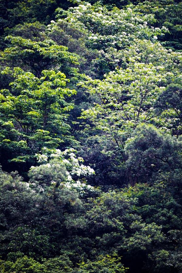 Tung blomma i skogen royaltyfria bilder