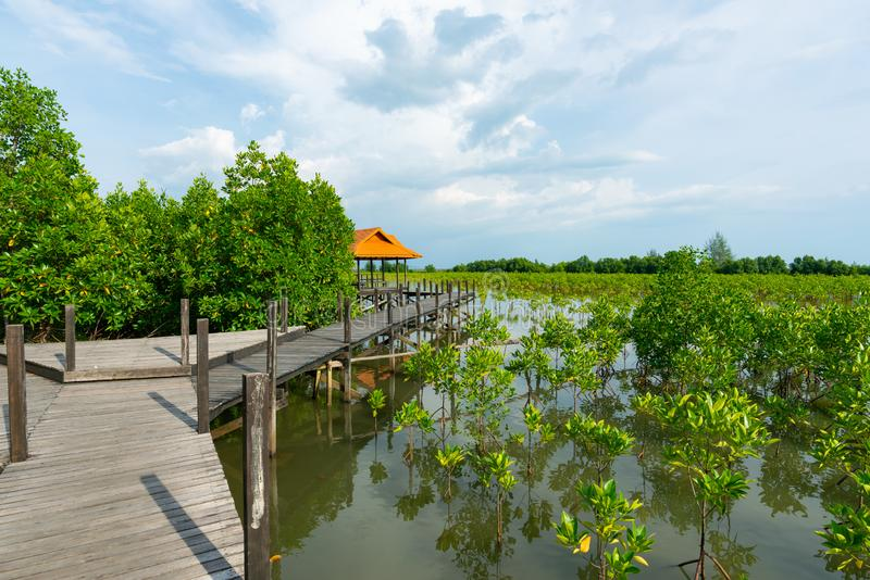 Tung Prong Thong of Gouden Mangrovegebied bij Estuarium Pra SAE, Rayong, Thailand stock afbeeldingen