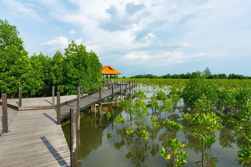Tung Prong Thong ou champ d'or de palétuvier à l'estuaire Pra SAE, Rayong, Thaïlande images stock