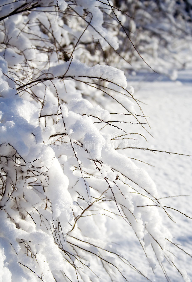tung snow royaltyfri foto