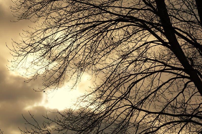 Tunga Autumn Sky Behind Dormant Branches royaltyfri foto