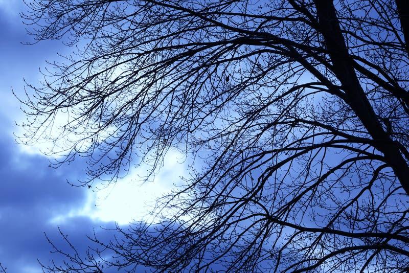 Tunga Autumn Sky Behind Dormant Branches royaltyfri fotografi