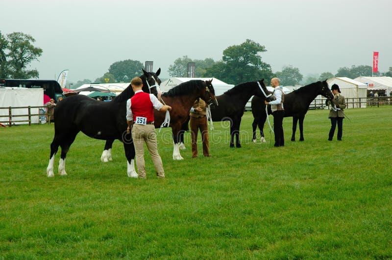 Tunga grevskaphästar royaltyfri fotografi