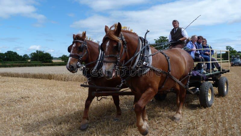 Tunga hästar på en show för arbetsdagsland i England royaltyfri fotografi