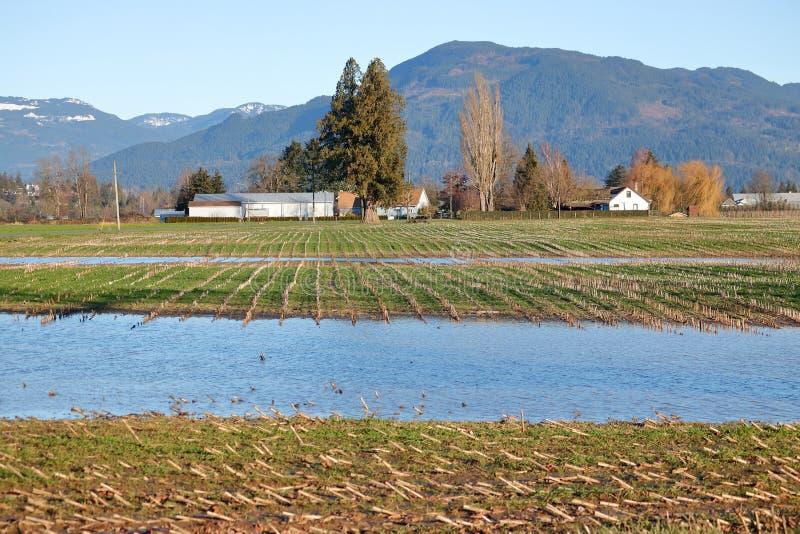 Tunga vinterregn och genomdränkt lantgårdfält royaltyfria bilder