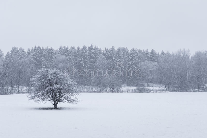 Tungt snöfall på den svenska skogen närliggande Stockholm royaltyfri bild