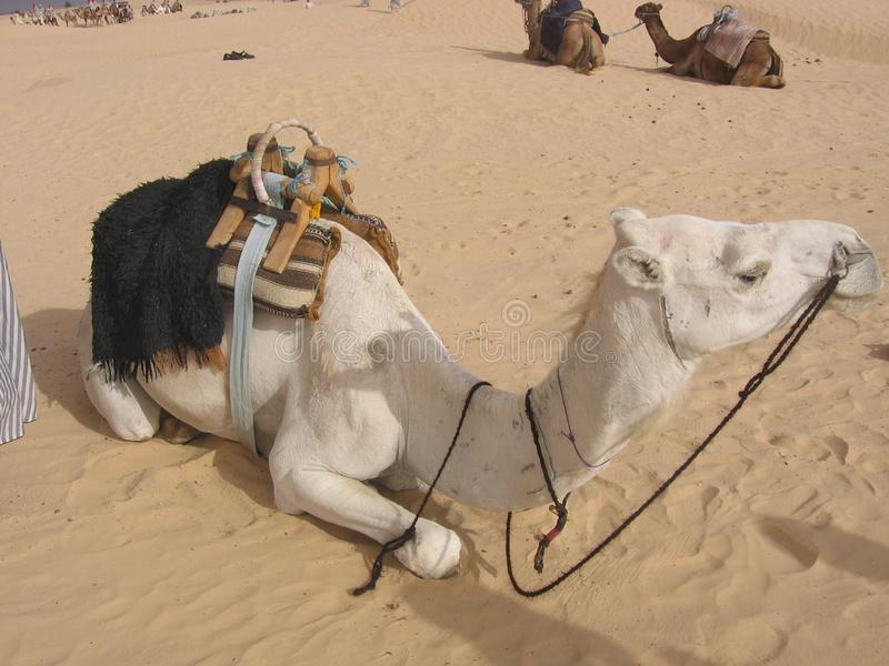 Sahara - Tunisia. Tunisia is a country in the Maghreb region of North Africa, covering 165,000 square kilometres. Its northernmost point, Cape Angela, is the royalty free stock photography