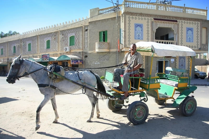 Tunisian carriage. Tozeur, Tunisia - September 16th, 2012 : Coachman in a carriage that take tourists through the biggest tunisian oasis that is called Palmeraie royalty free stock images