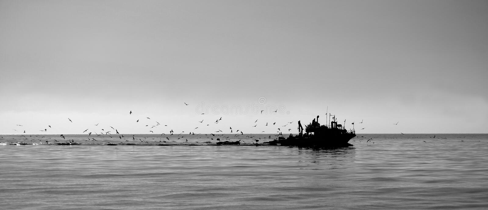 Tunisian fishing boat. The Tunisian fishing boat returns to its home port, accompanied by a flock of seabirds - the Scopoli`s shearwaters Calonectris diomedea royalty free stock photo
