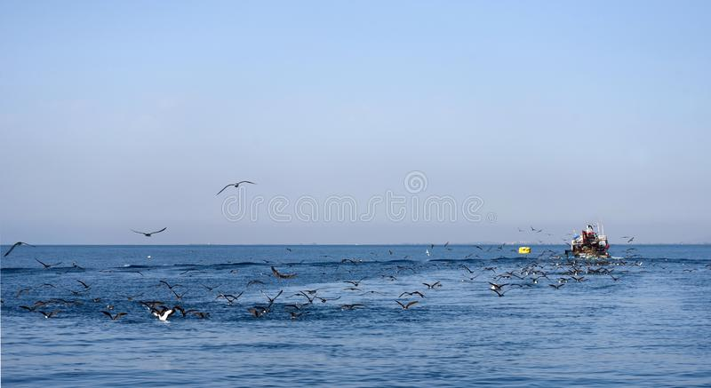 Tunisian fishing boat. The Tunisian fishing boat returns to its home port, accompanied by a flock of seabirds - the Scopoli`s shearwaters Calonectris diomedea stock photos