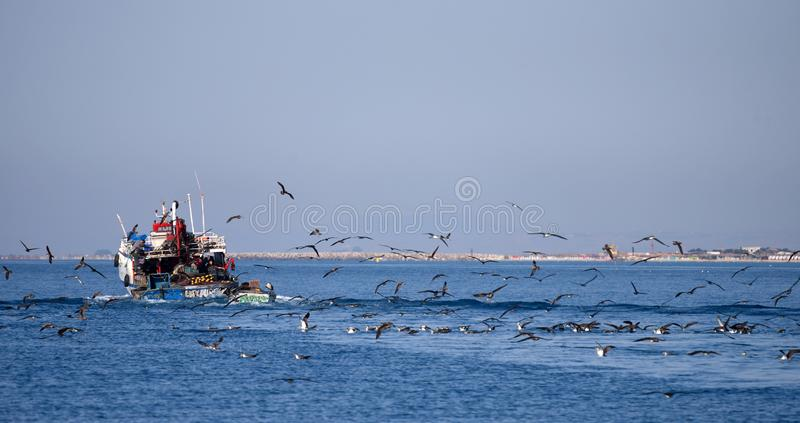 Tunisian fishing boat. The Tunisian fishing boat returns to its home port, accompanied by a flock of seabirds - the Scopoli`s shearwaters Calonectris diomedea royalty free stock image