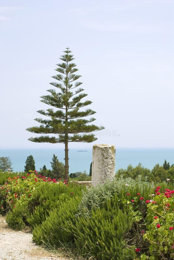 Tunisian landscape royalty free stock photos