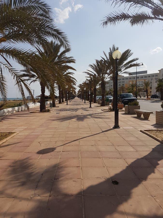 Tunisien Hammamet Jasmin royaltyfria bilder