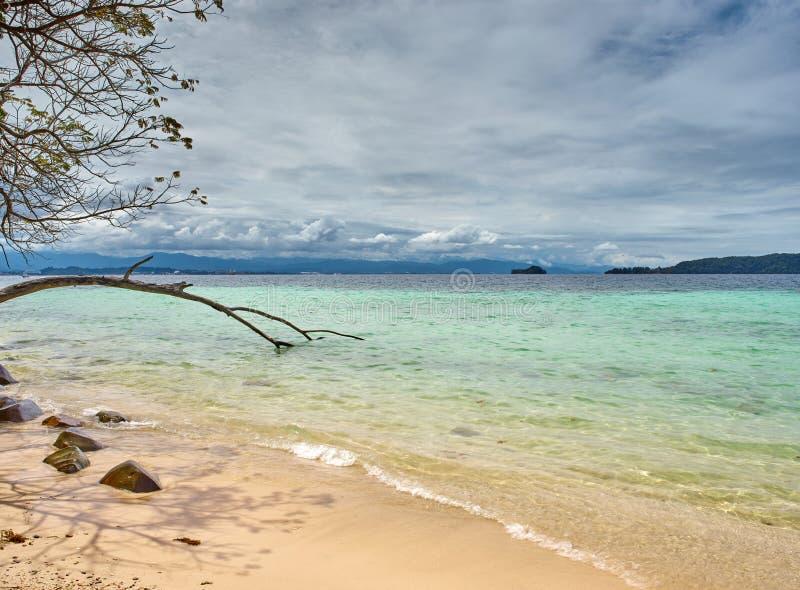 Tunku Abdul Rahman National Park, Baum Borneos, Malaysia- - Manukan-Insel stockfoto