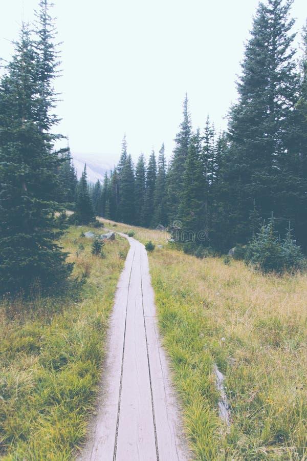 Tunn smal bana i en grön skog royaltyfri fotografi
