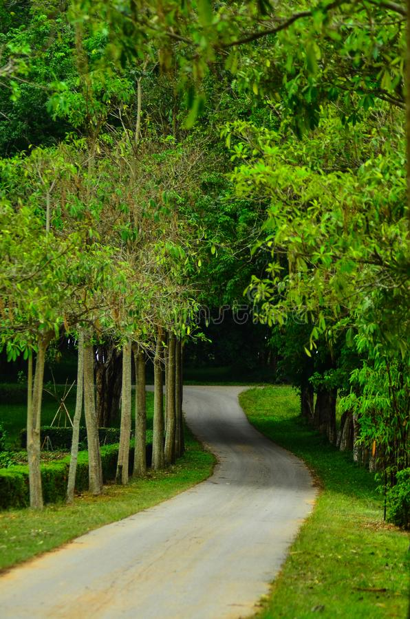 Tunnel-achtige Bomen, Boom Lined Footpath through Park in Spring royalty-vrije stock afbeeldingen