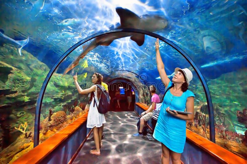 Tunnel acquatico nel parque di Loro, Tenerife immagini stock