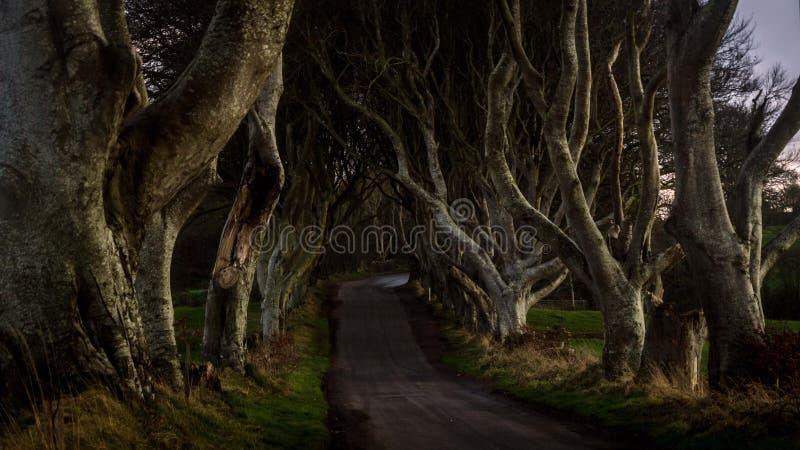Tunnel-als weg van ineengestrengelde beukbomen genoemd Donkere Hagen, Noord-Ierland stock afbeelding