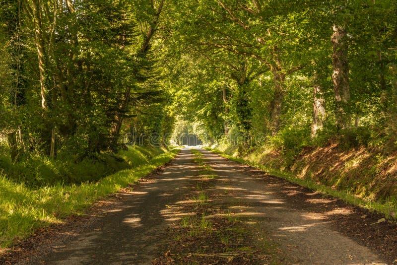 Tunnel av den gröna vägen för träd arkivfoton