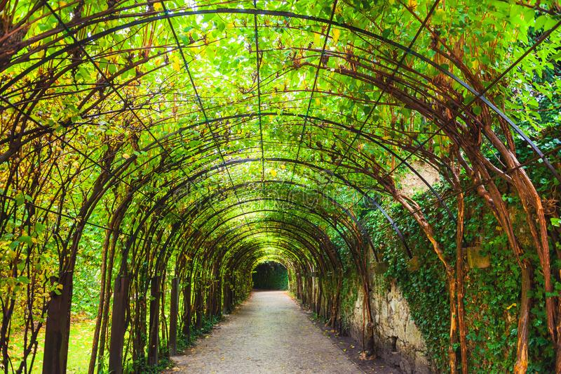 Tunnel av gröna växter arkivfoton