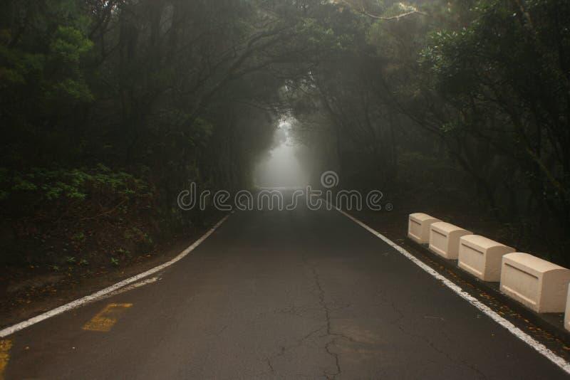 Tunnel av träd i mörk skog arkivbilder