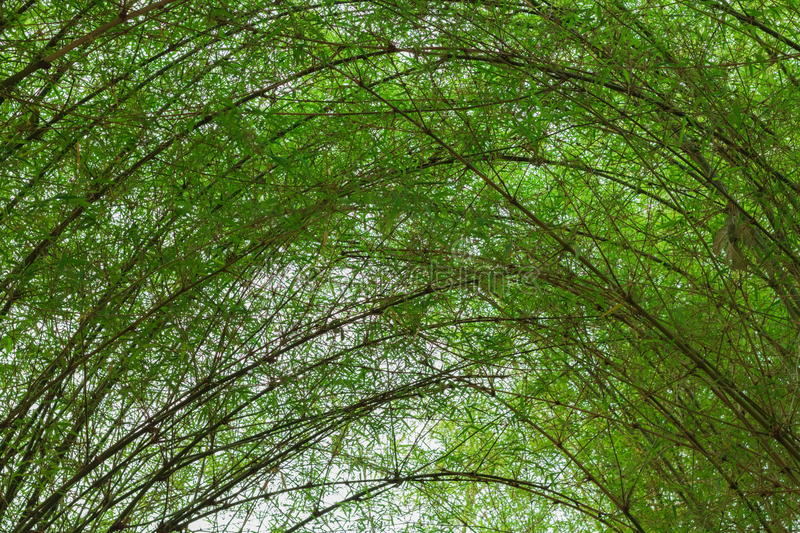 Tunnel bamboo trees royalty free stock image